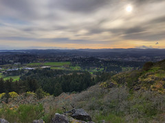 IMG_2527.jpg (Paul T. Marsh/PositivePaul) Tags: paulmarshphotography paultmarsh victoriabc vancouverisland lightroomcc iphone april2018 canada pacificnorthwest britishcolumbia wwwpaulmphotographycom 2018