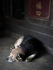 Saigon 41 (arsamie) Tags: saigon hochiminh hcmc temple dog sleep nap calm peace street urban asia cholon vietnam sentry animal friend