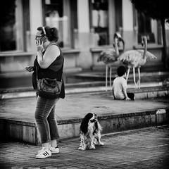 Flamingos (Fouquier ॐ) Tags: kid dog smoking urban city street monochrome blackandwhite bw antwerp belgium