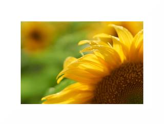 The Sun(, light rain and )flower.