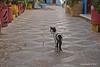 Arzila - Gato (Sofia Barão) Tags: marrocos morroco assilah