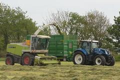 Claas Jaguar 870 SPFH filling a Broughan Engineering Mega HiSpeed Trailer drawn by a New Holland T7.230 Tractor (Shane Casey CK25) Tags: claas jaguar 870 spfh filling broughan engineering mega hispeed trailer drawn new holland t7230 tractor newholland nh blue rathcormac traktor traktori tracteur trekker trator ciągnik silage silage18 silage2018 grass grass18 grass2018 winter feed fodder county cork ireland irish farm farmer farming agri agriculture contractor field ground soil earth cows cattle work working horse power horsepower hp pull pulling cut cutting crop lifting machine machinery nikon d7200
