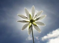 Sunny and Warm..x (Lisa@Lethen) Tags: sky day sun sunny sunshine nature weather cloud flower backlit macro