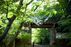 Osanpo_164 (gnsk) Tags: voigtlander voigtländer nokton 50mm f11 cosina japan landscape ilce7 a7 α7 sony