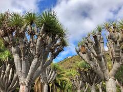Las Palmas de Gran Canaria www.elrincondesele.com (josemiguel_80) Tags: