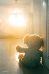 Teddy (Nas-Photographer) Tags: a7ii nasphoto đàlạt family duha sunset yellow red brown orange grain dyuha dyuhaphoto light photo photoshoot shunshine dark sony