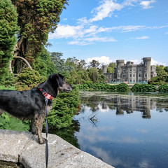 365-192 Queen of the Castle (Christine Schmitt) Tags: castle dog view lookout lake johnstown wexford wall 365the2018edition 3652018 day192365 11jul18