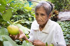 IMG35482 (HelpAge Asia Pacific (APRO)) Tags: asia asian csr chiangmaiprovince drr fopdev fang fangdistrict foundationforolderpersonsdevelopment helpage helpageasia helpageasiapacific helpageinternational ngo pruvolunteer pruvolunteers southeastasia southeastasian thai thailand age aged aging charity corporatesocialresponsibility development disasterriskreduction elder elderly elders female food fruit fruittree green hope lemon lemontree lemons nonprofit old oldage oldpeople oldperson olderpeople olderperson people person poor portrait poverty rural socialissues survivor tree trees victim volunteer volunteerism vulnerability vulnerable woman women