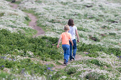 Skomer Island-25 (DoctorTimbo) Tags: skomer skomerisland wales