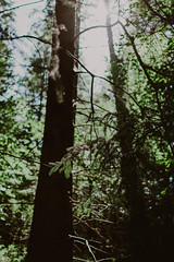 tiny green fingers   l  2018 (weddelbrooklyn) Tags: natur nikon d5200 35mm nature landscapes green wald baum bäume woods tree trees gegenlicht backlighting hamburg niedersachsen