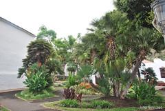 Ікод-де-лос-Вінос, Тенеріфе, Канарські острови  InterNetri  170