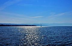 Léman diamants (Diegojack) Tags: morges vaud suisse d7200 nikon nikonpassion rncontre manifestation voileslatines bateaux léman lac barques brillance lumières groupenuagesetciel