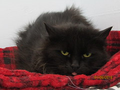 Shaggy - 9 year old spayed female