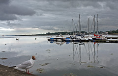 He dropped in for some ice cream (yamahagarn) Tags: northernireland strangfordlough portaferry