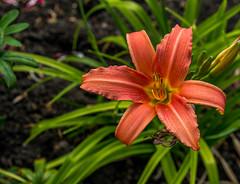 Flower (Blackburn lad1) Tags: bury flower plant xf1855