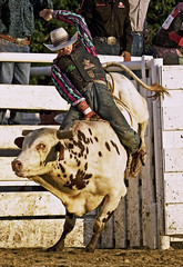 (emmett.hume) Tags: rodeo cowboy steer west cowtown newjersey challenge competition sports athletics tradition america grit contest determination 8 perseverence strength bull stock seconds difficulty summer