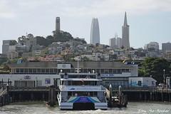 San Francisco Bay - 061618 - 02 - San Francisco Skyline (Stan-the-Rocker) Tags: stantherocker sony ilce sanfranciscobay sanfrancisco fishermanswharf northbeach salesforcetower sel18135 transamericapyramid coittower