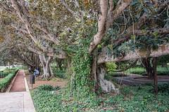 _DSC4791 (BasiaBM) Tags: rabat morocco botanical garden