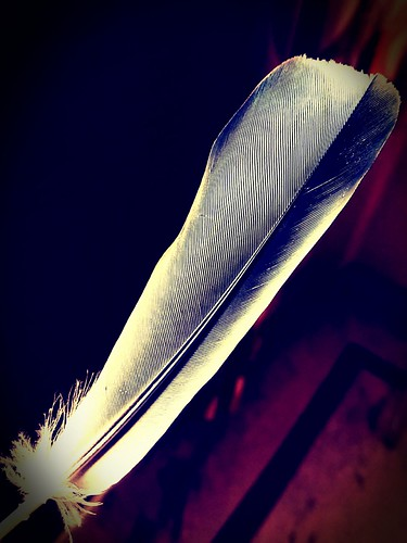 Photography 😎😎 Feather.. . . . . #colorful #royal #photographer #royals #photography #photo #pigeon #feathers #photooftheday #colourful #picoftheday #instapic #instashot #likes #followhim #instashoot #instagram #instagramer #instagoo