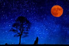 Bark at the Moon  !!! (imagejoe) Tags: moon vegas nevada street strip black white color shadows reflections tamron people nikon