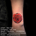 Rose Tattoo 1