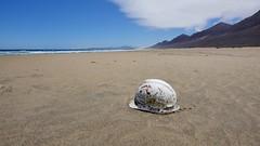 ? (flori schilcher) Tags: fuerteventura schilcher helm strand cofete meer sand ozean kanaren atlantik