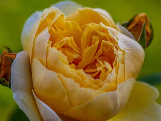 Blooming Marvellous (7DWF - Fridays - Flora)