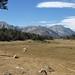 Sierra Nevada, meadow below Dorothy Lake, view northwest across Rock Creek canyon toward Hilton Lakes basin