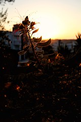 Before Sunset (22) (Polis Poliviou) Tags: nicosia lefkosia street summer capital life live polispoliviou polis poliviou πολυσ πολυβιου cyprus cyprustheallyearroundisland cyprusinyourheart yearroundisland zypern republicofcyprus κύπροσ cipro кипър chypre chipir chipre кіпр kipras ciprus cypr кипар cypern kypr ©polispoliviou2018 streetphotos europe building streetphotography urbanphotography urban heritage people mediterranean roads afternoon architecture buildings 2018 city town travel naturephotography naturephotos urbanphotos neighborhood