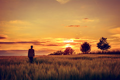 Game Changer (iratebadger) Tags: nikon nikond7100 d7100 golden sunset sky shadows sun solitary sunlight field farmland meadow person outside outdoors orange silhouette trees countryside country clouds colours yorkshire yellow grass standingalone standing iratebadger