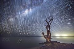 Boreen Point Star Trail (Tibro & Co) Tags: boreenpoint sunshinecoast milkyway star startrails queensland australia night longexposure