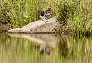 Wildlife around Magdalen June 2018 113