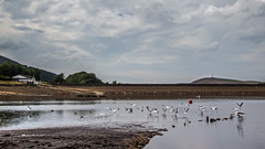 Dove Stones Reservoir (Craig Hannah) Tags: dovestones dovestonesreservoir chewvalley seagull sailingclub rspb peakdistrictnationalpark pennine westriding yorkshire craighannah july 2018 oldham greatermanchester england uk water walking drought photography photos canon