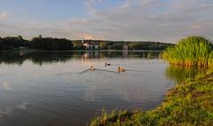 Lake in Minsk (free3yourmind) Tags: lake minsk belarus sanatorium ducks green nature