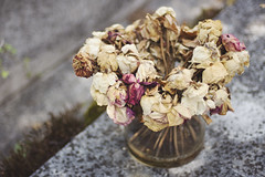 Paris No 70 (• CHRISTIAN •) Tags: paris france montparnasse cimetière cemetery graveyard mort death fleurs flowers fané wilted rose naturemorte 50mm f14 pdc dof