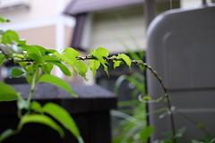 Spiral (しまむー) Tags: fujifilm xe2 xf ebc fujinon 35mm f14