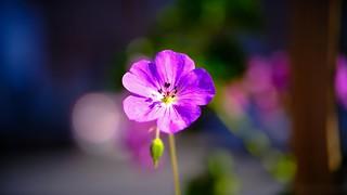 Flower - 5579