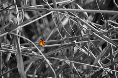 Arrullo (anitareal) Tags: mariposa insecto gris naranja naturaleza selva bosque yungas jujuy foto nationalgeographic blog noikon airelibrepersonal anamariareal galería artmajeur