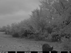 2018-06-24 06:32:44 - Crystal Creek 2 (Crystal Creek Bowhunting) Tags: crystal creek bowhunting trail cam