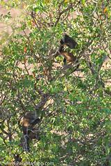DSC_8712-2 (paul mariano) Tags: paulmarianocom paul mariano allrightsreserved namibia wildlife photography animals africa