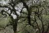 IMG_6670 (Abigail Miseldine) Tags: wood wistman wistmanswood boulder tree landscape bird moss lichen