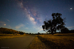 The Road to Mars, The Milky Way, and Jupiter (Mimi Ditchie) Tags: milkyway astrophotography field night road starrynight stars tree mars jupiter moonlight ty galaxy countryroad milkywaygalaxy getty gettyimages mimiditchie mimiditchiephotography