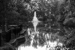 P1080620.jpg (martincutrone) Tags: monochrome pond reflections sunset