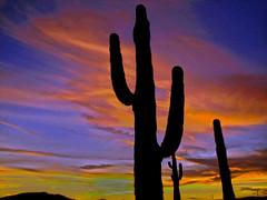 Iconic (oybay©) Tags: sunset sky fall autumn color colors cactus saguaro clouds nature natural arizona vistancia dusk silhouette