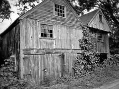 Old Corn Crib On Sandown Raod (walter_g) Tags: minoltaxd11 kiron28mmf20 fujineopanacros diafine epsonv500 vuescan rawtherapee gimp210 gmic