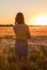 🌞 (CarolienCadoni..) Tags: sonyilcaa99m2 sony 70200mmf28gssmii sal70200g2 backshot sundown sun sunset light yellow summer