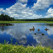 State Game Land 312 (Klondike Ponds Tract) (2)
