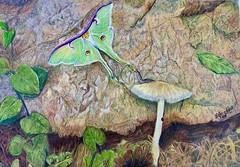 Secluded (Luna Moth #1807 Challenge) (bbriter99) Tags: lunamoth coloredpencil augustchallenge mushroom moth snail forest rock art