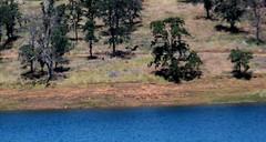 IMG_0655 (Anthony Lockstone) Tags: don pedro lake california