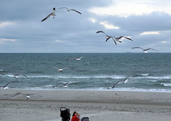 Gull attack (bob kopf) Tags: gull seagull beach ocean stone harbor nj stoneharbor birds